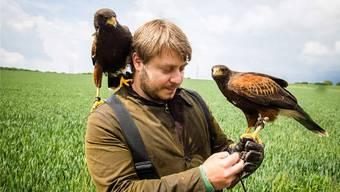 Falkner Ben Gregor Smith war mit seinen Raubvögeln mehrmals in der Liebrüti – gebracht hat es bisher wenig.