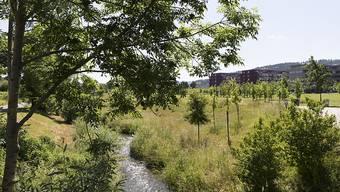 Kleine Fliessgewässer sind in der Schweiz nach wie vor stark verschmutzt. Hauptverursacher sind neben den via Kläranlagen anfallenden Mikroverunreinigungen die in der Landwirtschaft eingesetzten Pflanzenschutzmittel. (Archivbild)