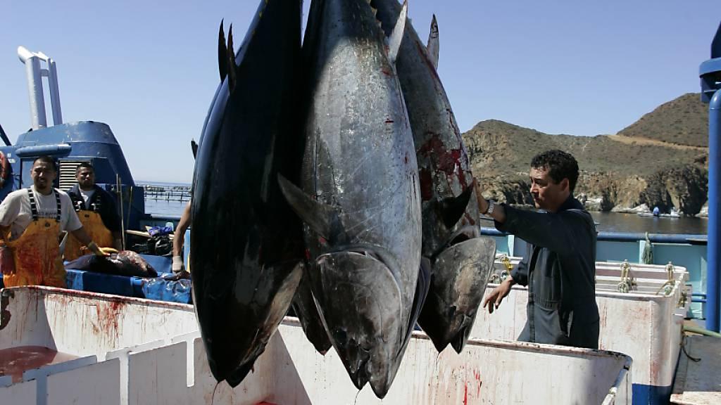 Fischbestände vor Kollaps: Ringen um Stopp schädlicher Subventionen