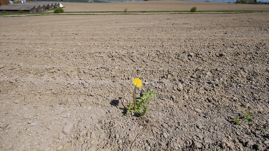 Wegen des Klimawandels braucht es Massnahmen gegen die Trockenheit. Im Thurgau wird im August eine Klima-Koordinationsstelle ihre Arbeit aufnehmen. (Symbolbild)