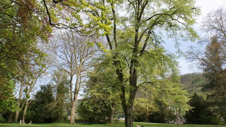 Die Baumidylle im Kurpark lädt zum Verweilen ein