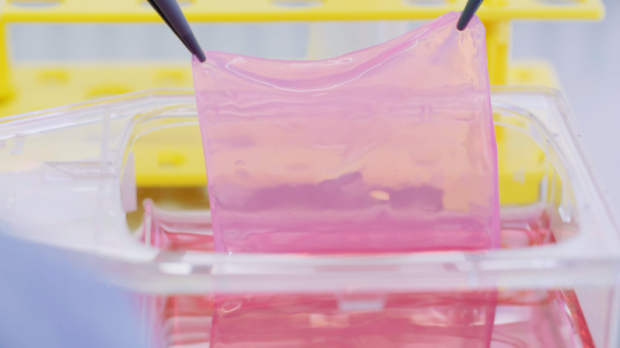 Hersteller von Hauttransplantate zum besten Schweizer Startup gekürt