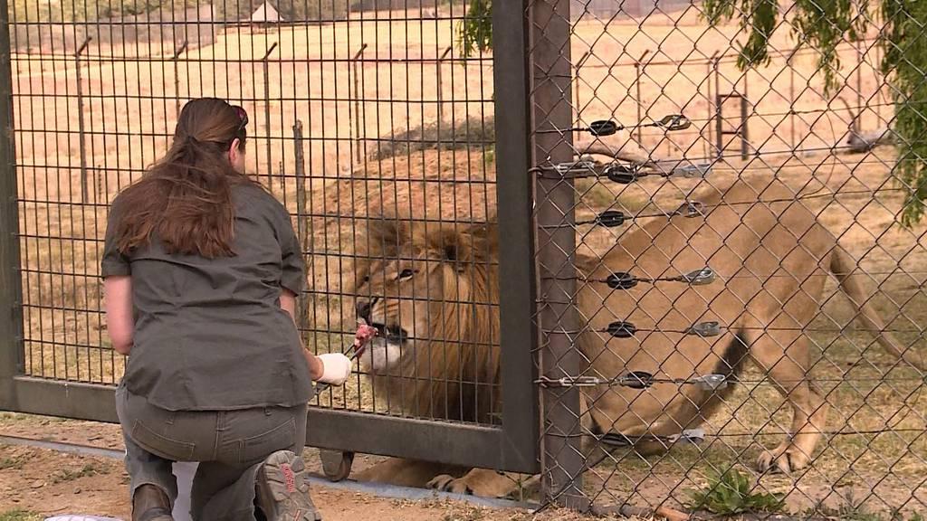 Tierische Rettungsaktion: Vom Kriegsgebiet nach Südafrika (Teil 2)