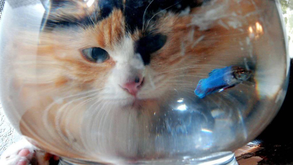 Katzen auf der Lauer sorgen auf Social Media und zwischen Nachbarn für Gesprächsstoff.