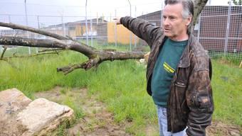 Eine Petition Soll den Raubtierpark von René Strickler (Bild) in Subingen retten. (Archiv/Oliver Menge)