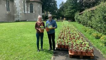 Fototermin mit über 1000 Pflanzen: Karin Stoop, Geschäftsleiterin Perspektive Region Solothurn-Grenchen und Urs Bucher, Verwalter des Kapuzinerklosters Solothurn.