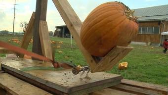 In Wildegg wird das Ende der Kürbiszeit mit einem brachialen Gemüsefeuerwerk besiegelt: Kürbisweitwurf mit selbstgemachtem Katapult!