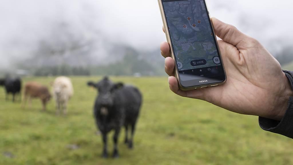 Der genaue Standort der Herden kann über die App von Outdooractive abgerufen werden.
