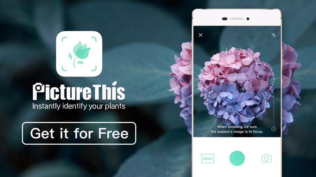 Picture This App - Ein Muss für jeden Hobbygärtner