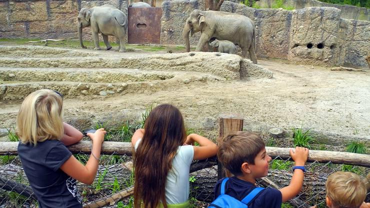 Am Freitag hatten Kinder mit einer Behinderung oder einer chronischen Krankheit sowie ihre Familien den Zoo ganz für sich allein. (Symbolbild)