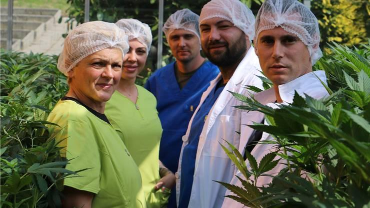 Stevens Senn (r.) und seine Mitarbeiter betreiben Hanf-Anbau im grossen Stil.Dennis Kalt