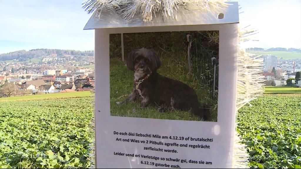 Totgebissen: Kleiner Hund stirbt nach Pitbull-Attacke