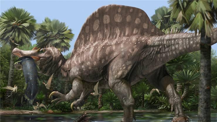 Spinosaurus aegyptiacus lebte vor rund 150 Millionen Jahren und war der grösste Fleischfresser bisher.