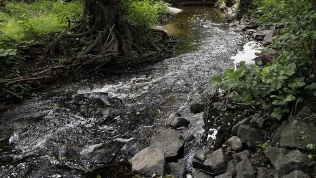 Zu viele Pestizide in St.Galler Bächen und Flüssen