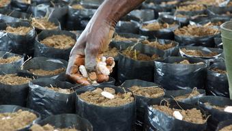 """Eindrücke von """"Fredy's Plantation"""" in der Elfenbeinküste"""