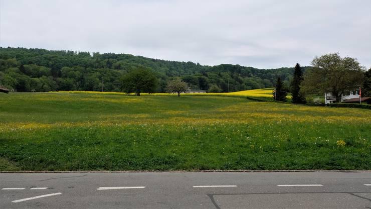 Hier auf der Hintermatt im Bergdietiker Ortsteil Kindhausen soll das neue Alterszentrum entstehen. Gegen den Vorvertrag zum Verkauf der Parzelle ist eine Aufsichtsanzeige eingegangen, die jedoch keine Auswirkungen auf die öffentliche Auflage hat. (Archivbild)