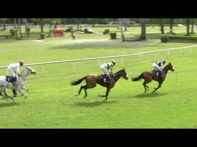 Pferderennen Aarau 1. Renntag 2016, 4. Rennen