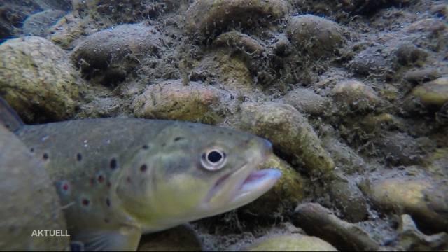 Wasserknappheit führt zu Fischsterben
