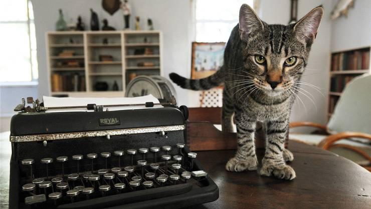 Diese Katze namens «Hairy Truman»arbeitet im Ernest Hemingway Museum. Wer beim Schreiben nicht weiter weiss, lasse seine Katze ein Gedicht tippen!