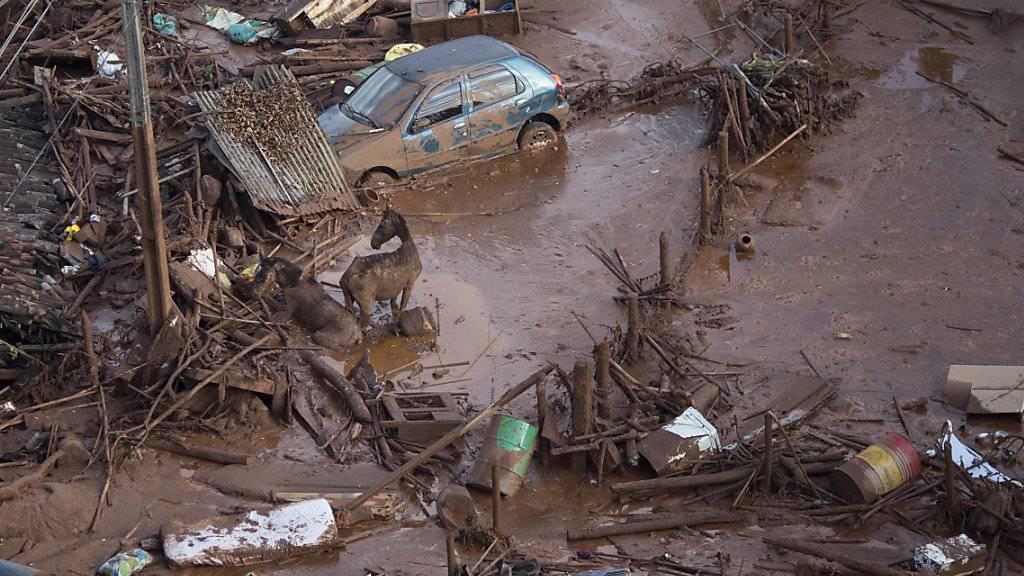 Pferde versuchen sich aus der Schlammlawine zu retten, die sich am Freitag über die Ortschaft Bento Rodriguez ergoss. Ursache war der Dammbruch eines Abwasserbeckens der Bergbaufirma Samarco.