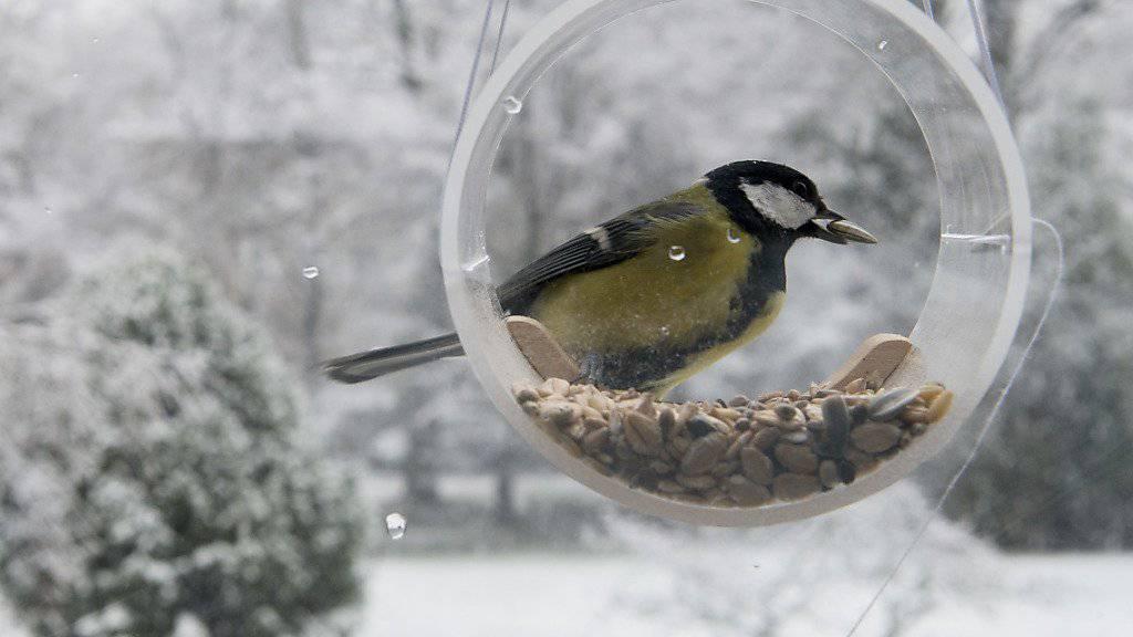 Um die Verbreitung von Krankheiten zu vermeiden, sollte gemäss der Vogelwarte Sempach ein besonderes Augenmerk auf die Hygiene am Futterhäuschen gelegt werden. (Archivbild)