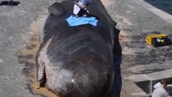"""Ein lebensecht wirkender Pottwal ist am Seine-Ufer gestrandet. Er stinkt gewaltig und wird von """"Wissenschaftlern"""" untersucht. Alles nur Kunst. (Screenshot Youtube)"""