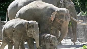 Nicht alle Elefanten leben so friedlich miteinander wie diese (Symbolbild)