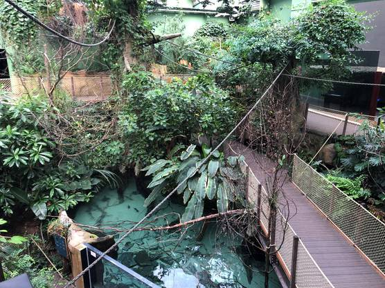 In der Tropenhalle taucht der Besucher im feuchten Klima des Amazonas.