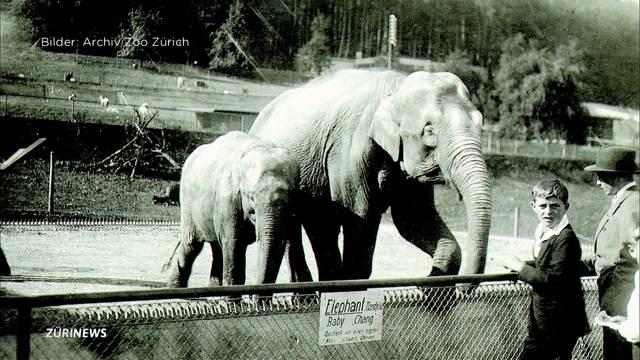 Elefantenhaltung im Zoo Zürich damals und heute
