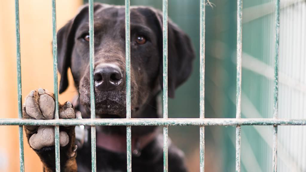Bund warnt Reisende vor unvorsichtigem Einführen von Tieren