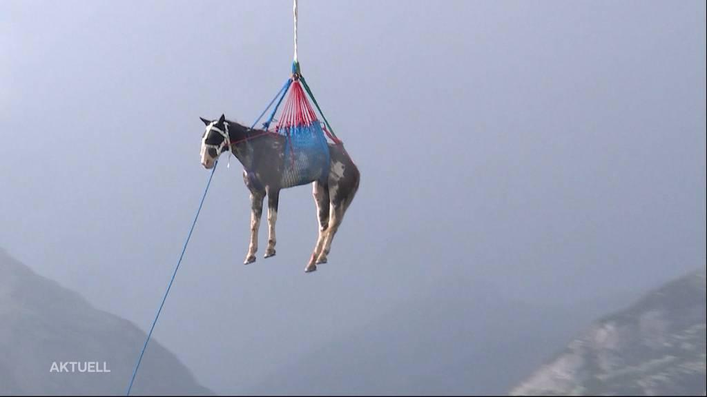 Spektakuläre Tierrettungen: Aus diesen misslichen Lagen wurden Tiere schon befreit