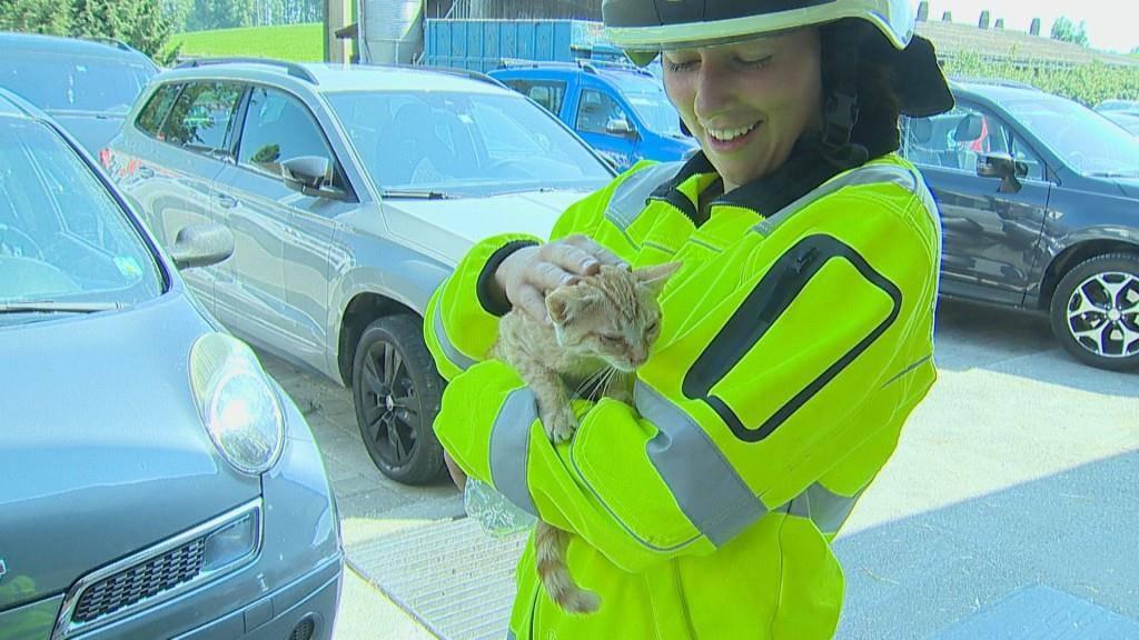 Auch eine Katze wurde gerettet.