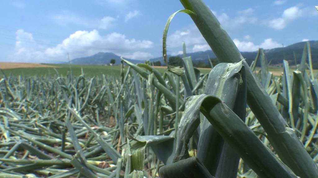Gewitternacht: Insbesondere Bauern erlitten Schäden