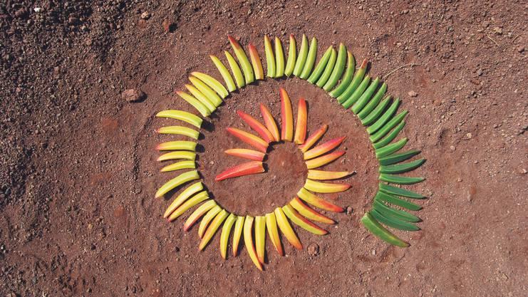 Nicht auf Anhieb fand Patrick Horber Blätter in allen gewünschten Farben. Mehrere Anläufe waren nötig, bis die Farbspirale im Kasten war.