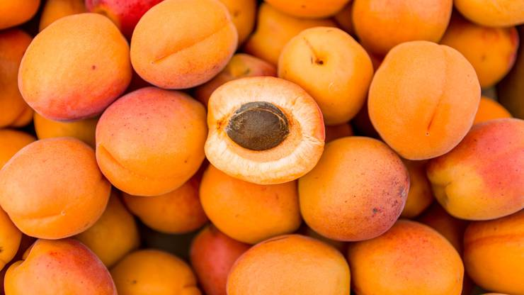 Damit die Aprikosen gut reifen können, brauchen sie Schutz vor Wetterkapriolen wie Frost und Hagel.