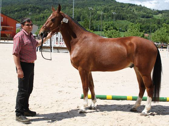 Christoph Saner ist mit 10 Pferden am Feldtest angetreten