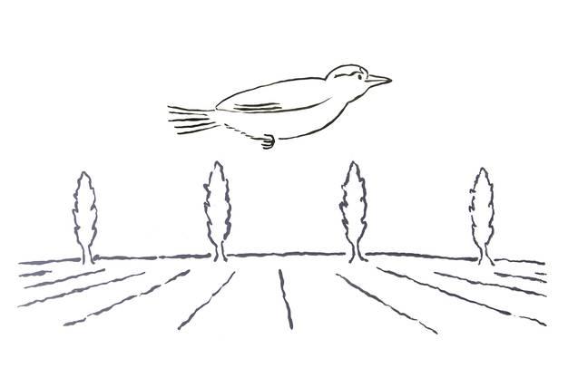 Hier sieht man eine Skizze des Bolzenfluges.