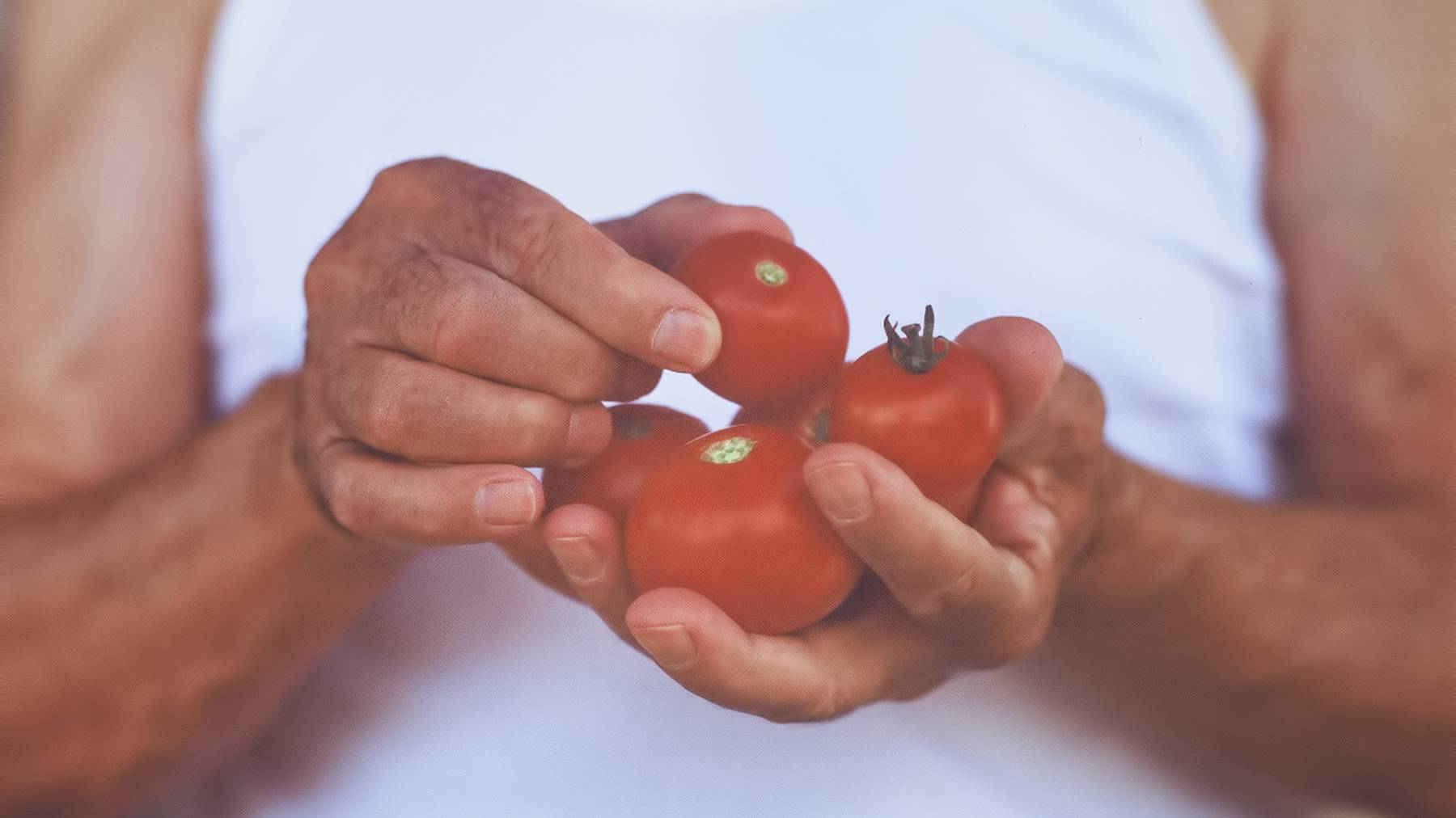 Tomaten sind fein.