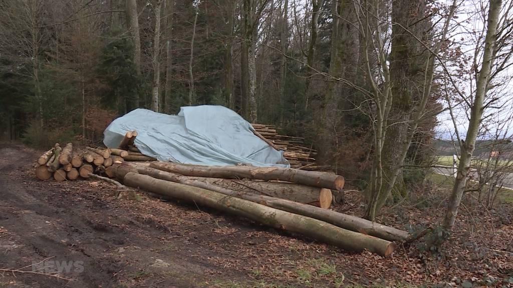 Toter Mann in Waldstück schockiert Meikircher