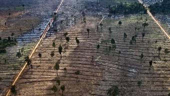 Gerodeter Landstrich auf Sumatra (Archiv)