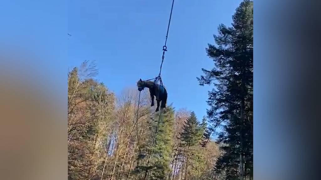 Madetswil (ZH): Pony mit Heli aus Tobel gerettet