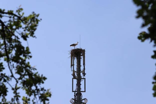Der Mast ist rund 30 Meter hoch und befindet sich im Biel-Benkemer Gewerbegebiet.