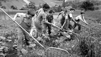 """Feldarbeit in der Armenerziehungsanstalt """"Dorneren"""" ob Wattenwil im Berner Gürbetal (Aufnahme vom Juli 1954)."""