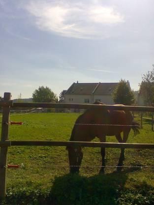 Dieses Pferd stand ein halbes Jahr immer im Stall. (ats)