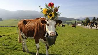 Kuhglocken gehören zum Brauchtum und sind auf Alpen sinnvoll, um entlaufene Tiere zu finden. Auf eingezäunten Weiden braucht es sie nicht, entschied jüngst das Baurekursgericht des Kantons Zürich