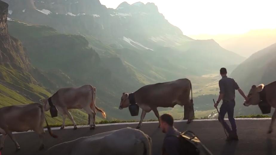 Diese Familie zieht mit ihren Kühen über den Klausenpass auf die Alp