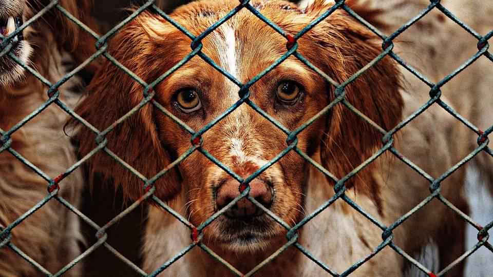 Viele Straftaten an Tieren bleiben unbestraft