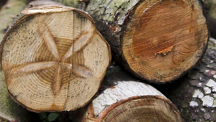Nicht nur zum Bauen oder als Brennstoff: Holz soll künftig auch Quelle für wichtige Grundchemikalien werden und dabei Erdöl ablösen. (Archivbild)