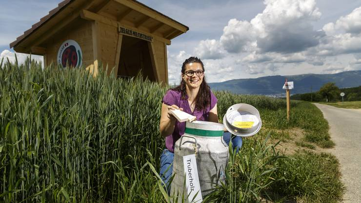 5 Posten mit Milchkannen hat Nicole Reusser auf dem Erlebnisweg aufgestellt.