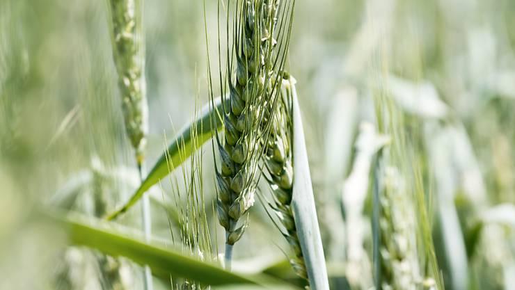 Bio-Landwirtschaft findet in der EU bisher nur auf wenig Feldern statt. (Symbolbild)